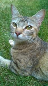 Cityzen Pets et l'éducation féline