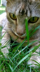 Dressage de son chat au rapport d'objet : ne pas oublier les pauses.
