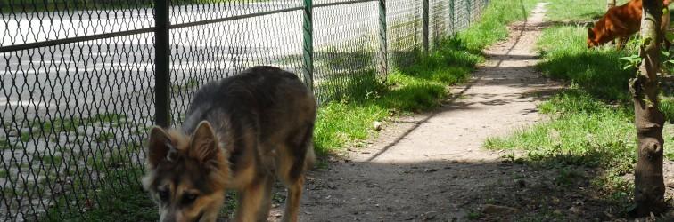 Les parcs à chiens à Bordeaux. Bien savoir les utiliser.