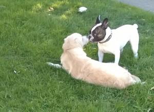 Le chiot et le parc à chiens