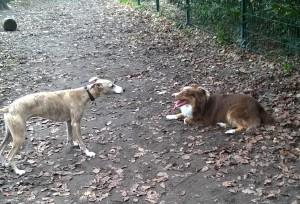 Rencontres entre chiens