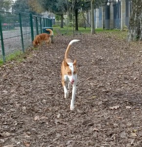 Parc à chiens à Bordeaux