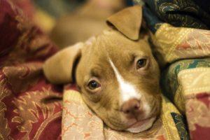 puppy-3091617_1920